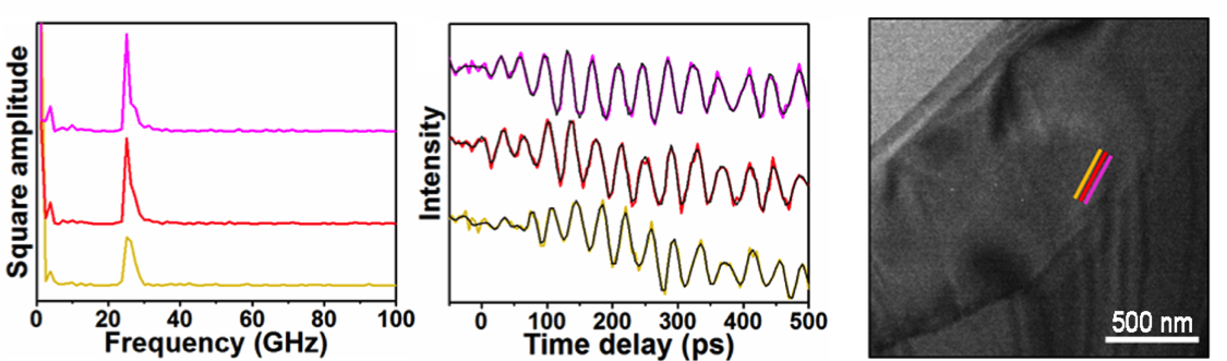 Femtosecond Electron Imaging of Defect-Modulated Phonon Dynamics